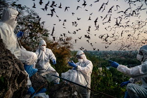 Bats and the Pandemic