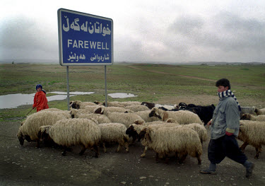 Kurdish shepherds lead their sheep along the highway, passing a road sign at the edge of town.