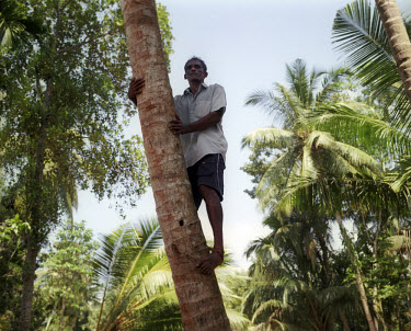 A man climbs a tree, four days after the tsunami which struck South Asia, when a rumour spreads that a second tsunami is about to hit. In the event, this was a false warning. On 26/12/2004, an underwa...