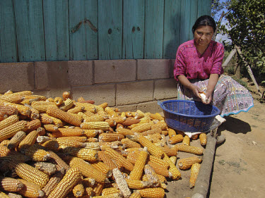 Woman removing corn from its dried husks.