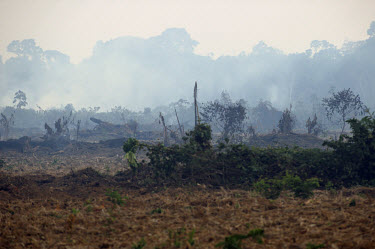 Land clearance by felling and burning takes place near Belterra along the BR163 highway, which serves as a major transport thoroughfare extending through the Amazon rainforest.