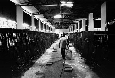 Cages line the walls of a warehouse at a bear farm in the city.  The farm keeps over 290 adult bears in captivity.