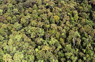 An aerial view of the rainforest in the central highlands seen from a few hundred metres above the canopy.