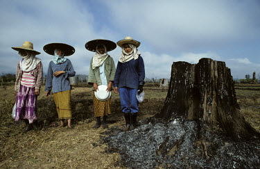 Women working amongst the teak stumps left in an agricultural field following deforestation.