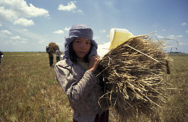 Girl holds a bundle of harvested rice.
