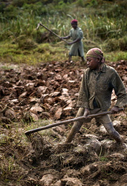 Oleme works a rice paddy field. Members of his family have suffered from dysentery due to drinking water polluted by the Ambatovy Mine, which is 1 km from their village. Sherritt, one of the world's b...