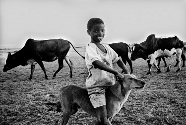 A shepherd boy with his dog amongst his herd of cows on the Angonia plains in northern Mozambique.