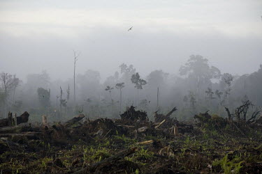 An area which has recently been deforested in preparation to expand the Duta Palma palm oil plantation.
