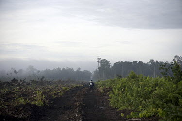 A man walks down a muddy path in an area which has recently been deforested in preparation to expand the Duta Palma palm oil plantation.