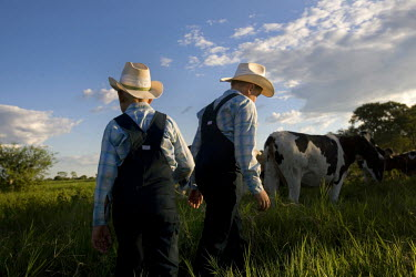 Two boys collect the cows from the fields in a Mennonite village. Near the city of Santa Cruz, there are about 15,000 Mennonites living in isolated communities. Mennonites are a group of Christian Ana...