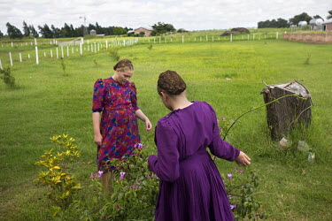 Two sisters look at flowers in a field in a Mennonite village. Near the city of Santa Cruz, there are about 15,000 Mennonites living in isolated communities. Mennonites are a group of Christian Anabap...