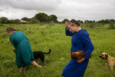 Two girls walk through a field with their dogs and a chicken in a Mennonite village. Near the city of Santa Cruz, there are about 15,000 Mennonites living in isolated communities. Mennonites are a gro...