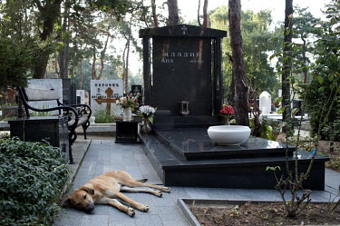 A dog sleeps at the graveside of former Bosnian Serb general Ratko Mladic's daughter Ana at the Topcider cemetary, she committed suicide in 1994, at the height of the war in Bosnia. Mladic is one of t...