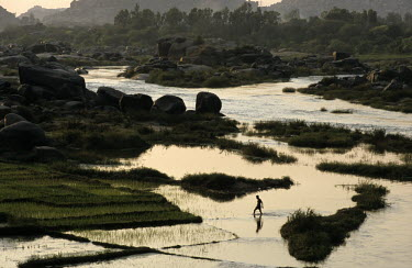 A man walks through paddy fields flooded by waters overflowing from the Tungabhadra River.