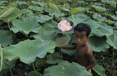 A young boy stands in a pond next to a Lotus flower.