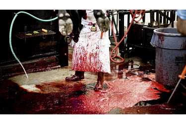 A slaughterer stands in a pool of blood from freshly killed beef cattle in a small family owned slaughter and meat packing company in Mead, Kansas. At this firm they typically slaughter ten animals ea...