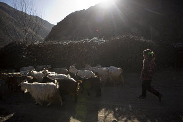 A young girl herding goats near the village of Jiamu Guan.