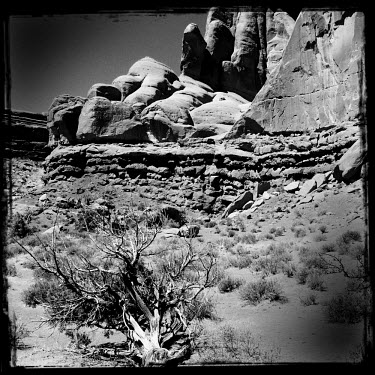 A rocky landscape with a dead tree in the foreground in the Arches National Park in Utah.