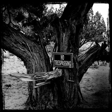 A sign on an ancient, gnarled tree reads 'No Trespassing'.