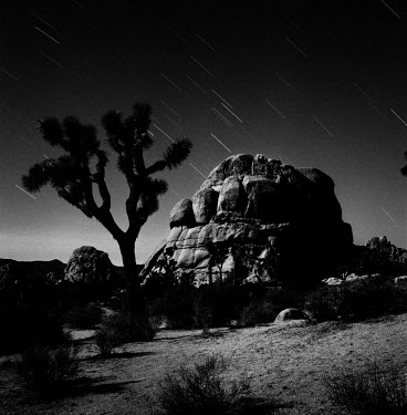 A Joshua tree and rock formation at night time in the Joshua Tree National Park.