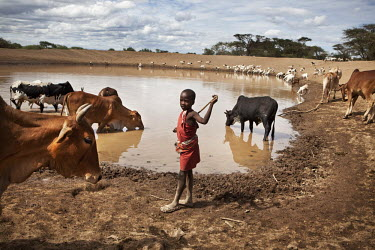 A Maasai boy, cattle and sheep at a check dam. The Maasai call this Rain Water Harvesting structure osilange. It's made out of an earth dam in an area where rain water flows down. This is a traditiona...