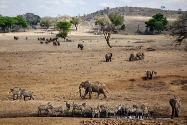 Taita Hills Wildlife Sanctuary, a private conservancy, adjacent to Tsavo West National Park. Zebra and elephants drink water from an artificial well.