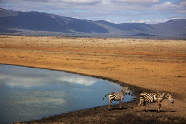 Two zebras at a water hole in Tsavo East National Park.