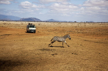 A zebra runs past a tourist vehicle in Tsavo East National Park.