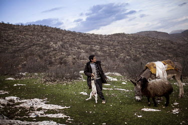 A young Yazidi shepherd holds a lamb next to a sheep and a donkey in the mountains of Lalish. The Yazidi are a Kurdish ethno religious group. They adhere to a branch of Yazdanism that blends elements...