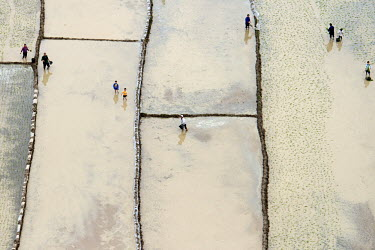 People work in rice fields in Nanning.