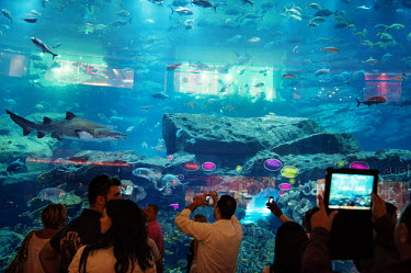 Shoppers take pictures through a large glass plate window of fish, including sharks, that are swimming in a fish tank inside the Dubai Shopping Mall, one of the world's largest malls.