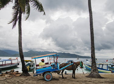 A cidomo pony cart driver looks out to sea while waiting for a passenger. On Gili Air the cidomo is the only form of transport, there are no cars or taxis.