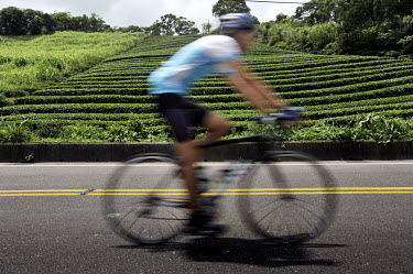 A cyclist riding among the tea plantations between Xindian and Pinglin in New Taipei City, the vast, hilly area surrounding Taipei, formerly known as Taipei County.