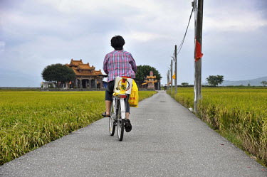 A woman rides a bicycle to a temple along a path through a rice paddy.