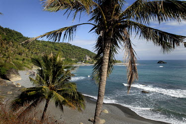 Palm trees grow at the back of a beach made of volcanic sand.