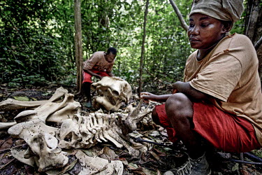 Aurelie Kumbe and Tuburse Mouyamba examine an elephant carcass they found outside their village in the Gamba district. The tusks are long gone, but bones as large as these are not easily buried.