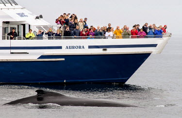 Tourists spot a humpback on a whale watching trip in Massachusetts Bay, New England.