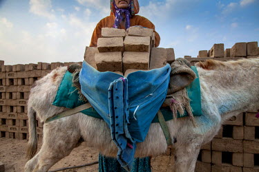 Saguna, a worker at the M.A Ambabur brick kiln, loads a donkey with unfired bricks. Modern India is built on the backs of donkeys. They transport building materials at construction sites and have long...