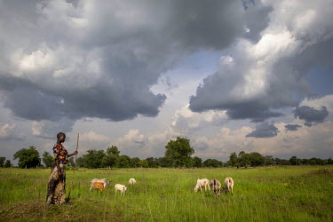 Nancy Baako, 20, watche over a herd of cattle grazing near Oligi displaced South Sudanese settlement where she lives with her step mother. Nancy's family fled conflict in what then Sudan in the 1990s...