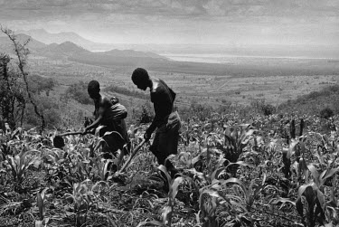 A farmer and his wife, with her baby strapped on her back, weed their maize plot in the hills of Garuso. in the background is the artifical lake Chicamba.