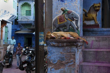 A dog sleeps at the entrance to a temple in the 'Blue City' of Jodhpur where the narrow streets are painted blue, some say to ward off mosquitos and keep the air cool.