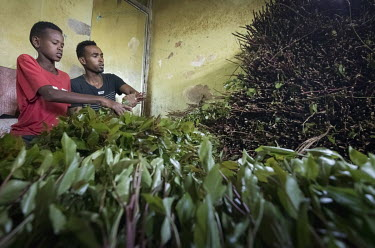 At a qat trading stall in Aweday, a big hub for the qat trade, the stall holders are surrounded by bunches of the plant.