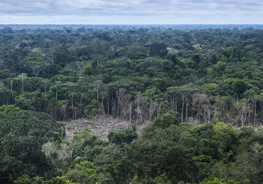 Deforestation, due to logging but mainly to clear land for pasture for cattle, scars the rainforests of the Serrania de Chiribiquete National Park.