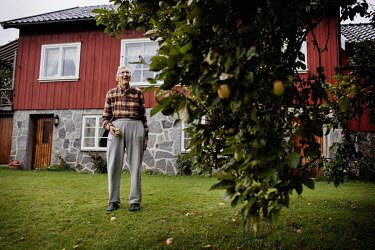 Lars Bottolfs (94) picking apples in the garden of his home. He was part of the Osvald Group, a Norwegian sabotage organisation, during the German occupation in World War Two. He took part in blowing...