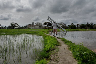A man carries a ladder as he walks on a raised path that forms a dam between two paddy fields after repairing part of the village's solar power equipment that was damaged during a storm.