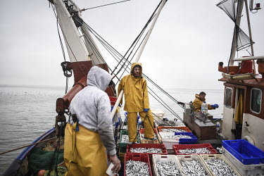 After two hours fishing at sea, Richard Eaves, and his crew, unload 100 boxes of sprats in the harbour. Their catch will be packed and distributed at one of a few fish processing businesses operating...