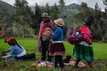 Farmer and mountain guide Saul Luciano Lluya (37) harvesting mint with his family in the community of Llupa. Saul is suing a German energy company, seeking compensation for shrinking glaciers in Peru....