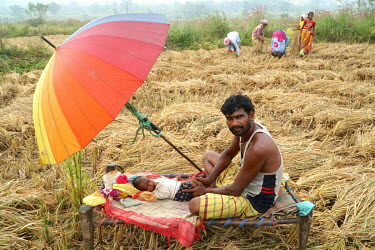 Farmer Mast Pradhan Hansda (35) and his baby Dharma Hansda (four months) who is lying beneath an umbrella in a field as his family harvest the crops nearby.