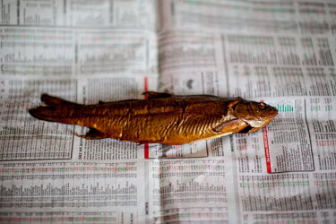 A freshly smoked trout lies on a page of the Taunus Zeitung newspaper.