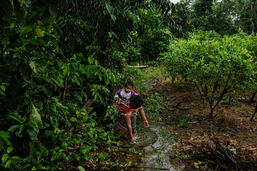 A Cocalera (coca leaf farmer), carrying her son on her back, washes her hands while she works among her coca plants in a plantation in rural Chimore, in the Chapare region. This is the main area where...